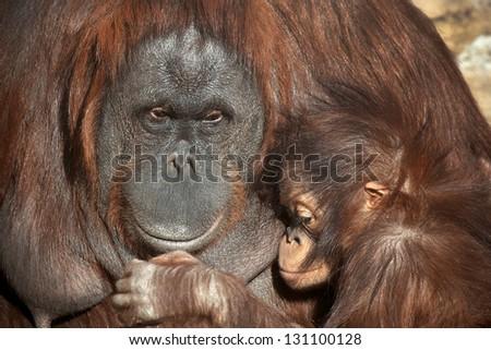 Animal motherhood - stock photo