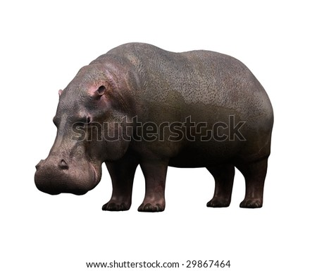 Animal on a white background