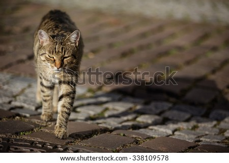 Animal Portrait of a house cat walking the streets - stock photo