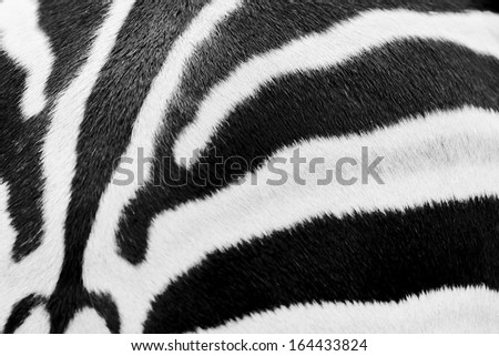 Animal print, zebra texture seamless background black and - stock photo