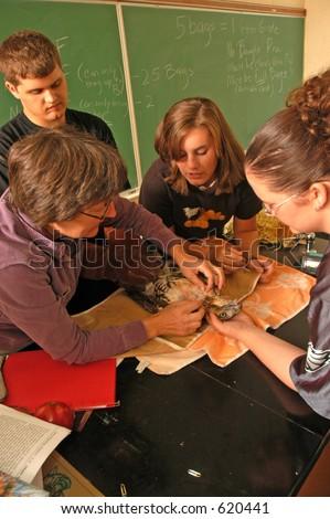 animal rehab class - stock photo