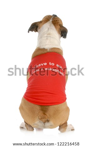 """animal rescue or adoption - dog with back to camera with message on shirt """"I have to ask .... am I adopted?"""" - stock photo"""