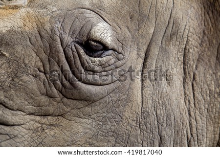 animal/rhinoceros,eye