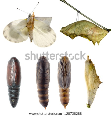 Animal set, butterfly and moth cocoon collection isolated - stock photo