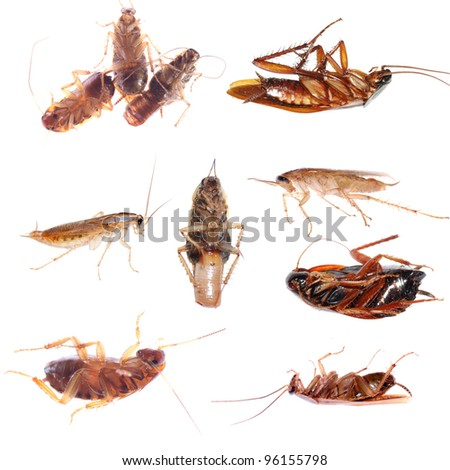 animal set insect cockroach  bug isolated collection