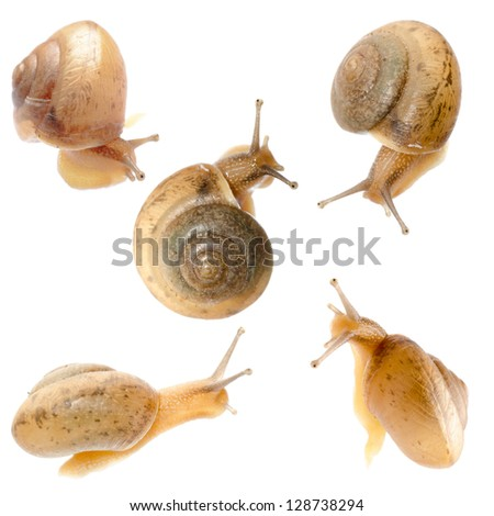 animal set, snail collection isolated - stock photo