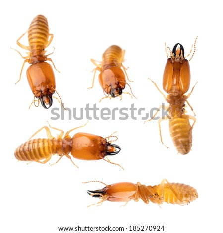 animal set termite white ant bug isolated collection - stock photo