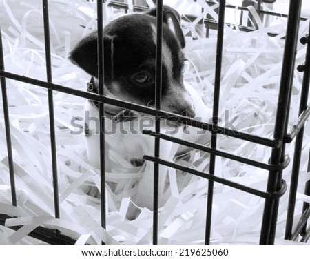 Animal Shelter Orphaned Pet. A stray dog at the pound  - stock photo