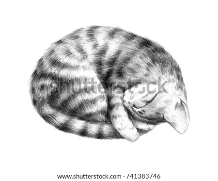 Animal sketch pencil drawing of a sleeping kitten cute pet striped cat