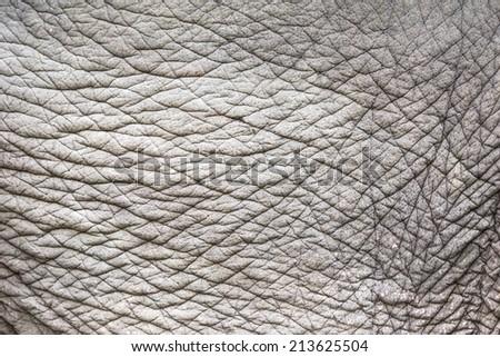 Animal skin background - stock photo