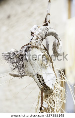 Animal skull in a festival of witchcraft, detail of a halloween decoration - stock photo