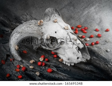 animal skull, in black and white, animal remains, dead body - stock photo