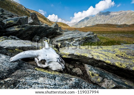 Animal skull left between the rocks in the mountains - stock photo