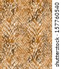 animal snake skin, background concept - stock