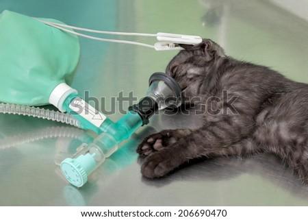 cat surgery