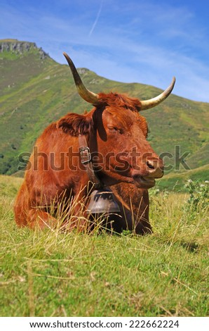 Animal theme. Peaceful cow with mountains in background  - stock photo