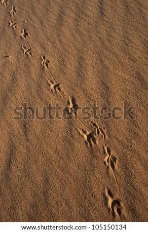 Animal Tracks in Sand, Coral Pink Sand Dunes State Park, Utah - stock photo