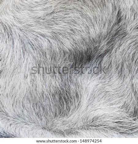 Animal wool background  - stock photo