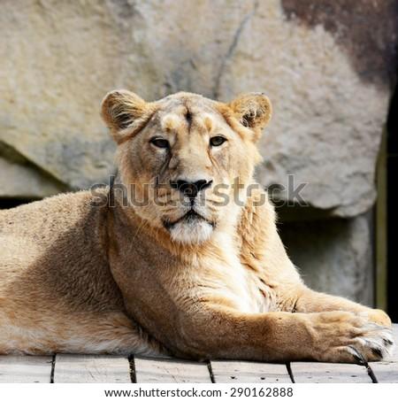 Animals - stock photo