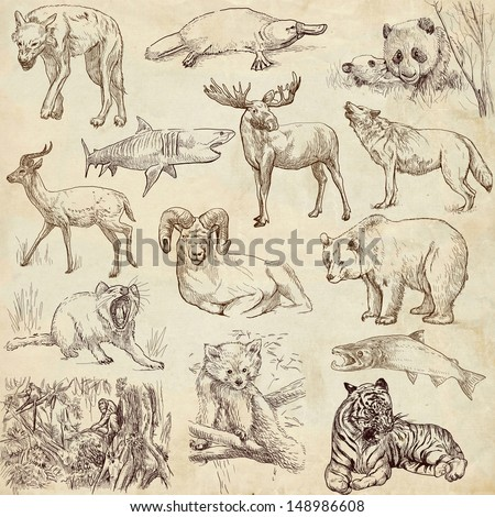 Animals around the world (collection no.2, paper) - Collection of an hand drawn illustrations. Description: Full sized hand drawn illustrations drawing on old paper. - stock photo