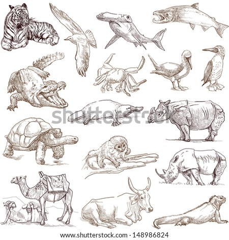 Animals around the world (collection no.3, white ) - Collection of an hand drawn illustrations. Description: Full sized hand drawn illustrations drawing on white background. - stock photo