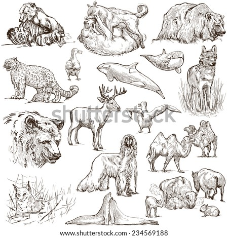 Animals around the world (set no.10) - Collection of an hand drawn illustrations. Description: Full sized hand drawn illustrations drawing on white. - stock photo