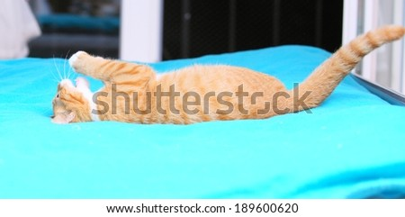 Animals at home. Red cute little baby cat pet kitten laying on bed playing turquoise blanket - stock photo