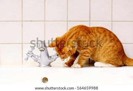 Animals at home - red cute little cat pet kitten in bathroom sink drinking water - stock photo