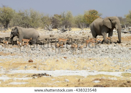Animals at watering hole, Etosha National Park, Namibia - stock photo