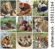 Animals collage with lion, red panda, panda, cheetah, tiger, monkey and sloth - stock photo