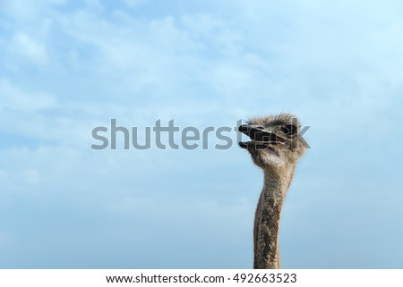Animals in captivity. Head of an ostrich is above the fence.