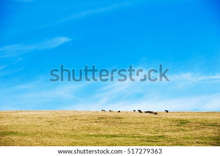 animals in the desert, landscape