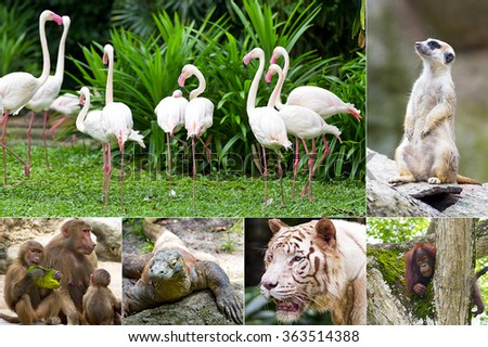 Animals in the Zoo - stock photo
