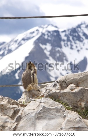 Animals of Canadian Rockies - stock photo