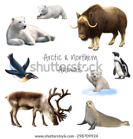 Animals of the arctic and antarctic: polar bear laying with babies, king and emperor penguin swimming and standing, seal and reindeer isolated on white background - stock photo
