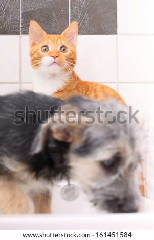 Animals pets at home dog puppy mutt and little red cat kitten playing together in bathroom sink - stock photo