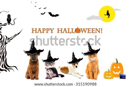 Animals with witch hats for halloween, isolated on white - stock photo