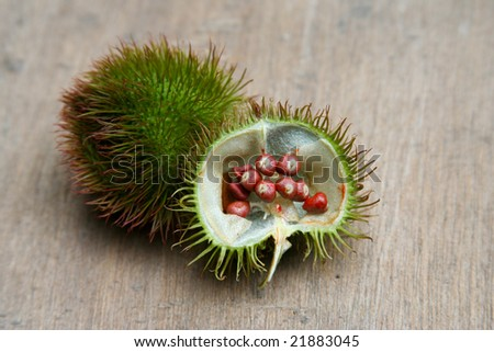 Annatto pods - stock photo