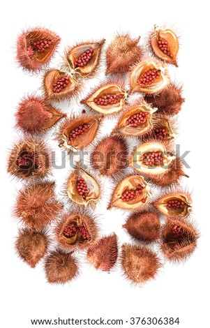 Annatto tree (Bixa orellana L.) of Thailand medicinal properties of the drug.  - stock photo