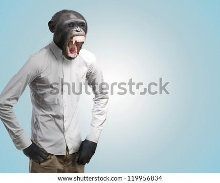Annoyed Monkey Shouting On Turquoise Background - stock photo
