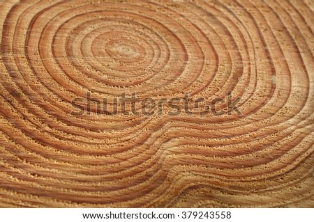 Annual rings; growth ring; wood ring