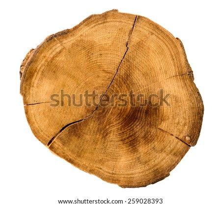Annual tree growth rings of the cross-section of a tree trunk isolated on white. Overhead view