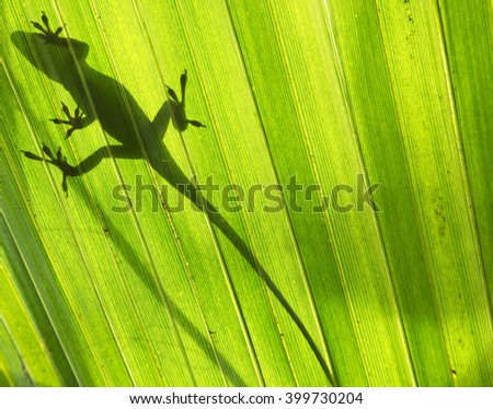 Anole Shadow - stock photo
