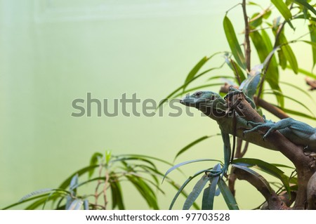Anolis sp. - Anole stretched out on branch with space for text - stock photo