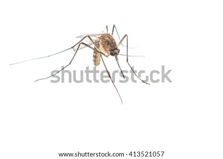 Insect Spray Character Squirting At A Fly Poster Art Print 74454 moreover Attractants besides Search Vectors likewise Sfo0336 further Getting Dumped. on repellent cartoon insect