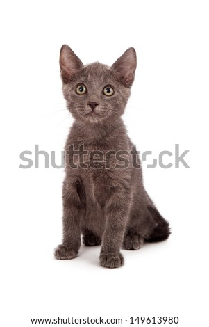 Another adorable little eight week old kitten sitting against the white background and looking at the camera - stock photo