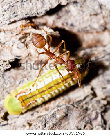 Ant and worm in marco mode - stock photo