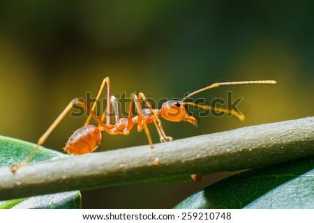 ant ant ant - stock photo