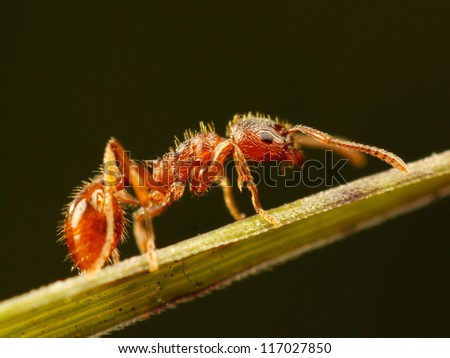 ant close up