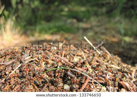 ant colony - stock photo